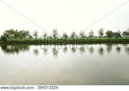 Blurred Water View With A Line Of Pine Trees Growing Beside A Lake And Green Nature Background