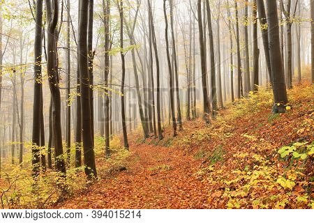 Path trees autumn forest woods Nature background mist fog tree Nature background orange Nature background trail alley fall Nature background yellow leaves foliage Nature background Nature background landscape Nature background season Nature background.