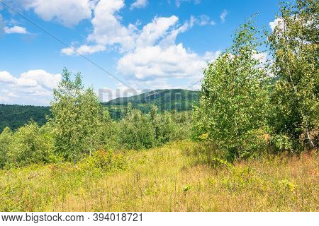 Young Forest On The Meadow In Mountains. Summer Nature Scenery With Range Of Trees Beneath A Blue Sk