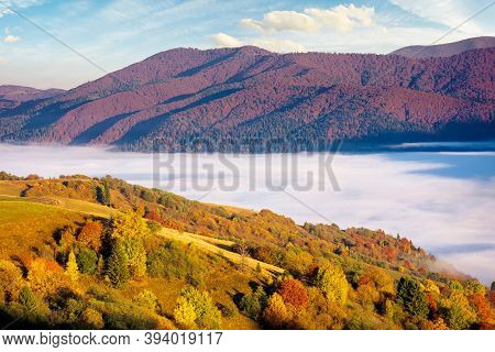 Rural Landscape In Autumn Season. Foggy Valley In Morning Light. Trees In Colorful Foliage. Sunny We