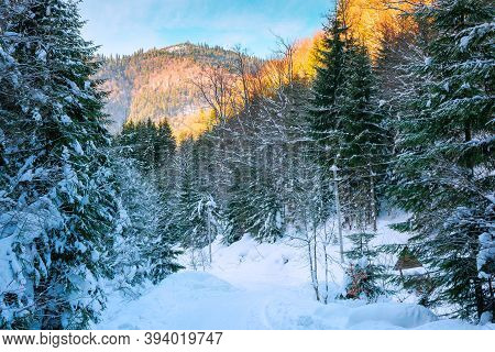 Road Through Synevyr National Park In Winter. Trees And Path Covered In Snow. Beautiful Mountain Lan