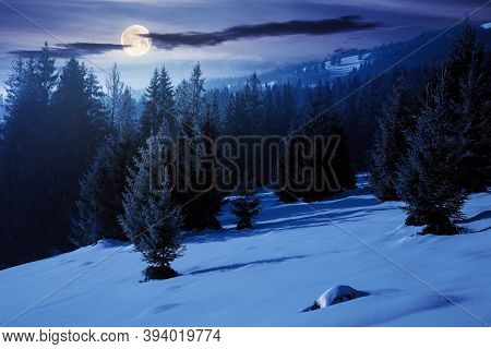 Spruce Forest On A Snow Covered Hill At Night. Beautiful Mountain Landscape In Winter In Full Moon L