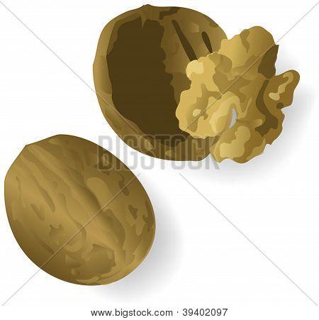 Vector walnut