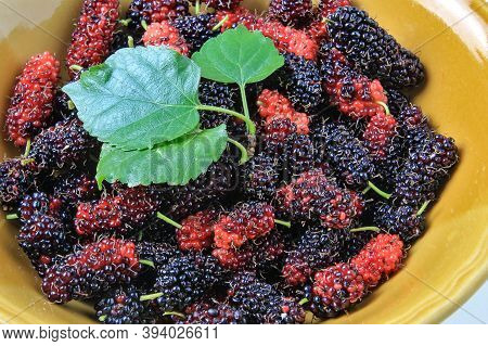 Mulberry Fruit Has A Cool Sweet And Sour Taste. It Has Properties To Help Cooling The Throat, The Le
