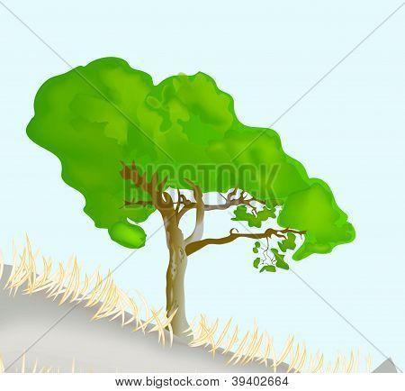 vector pine