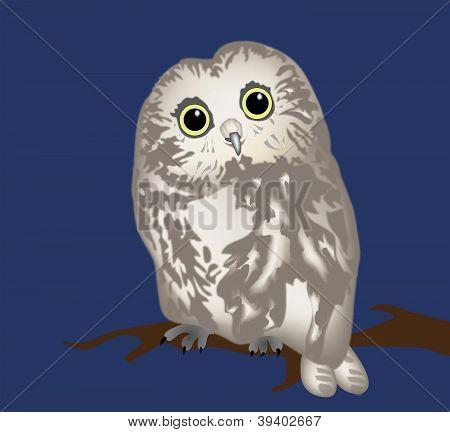 vector owl
