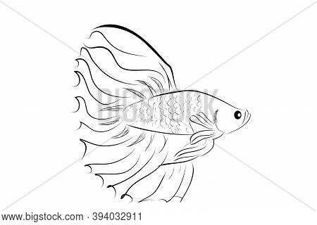 Vector Betta Or Siamese Fighting Fish, Big And Beautiful Tail.