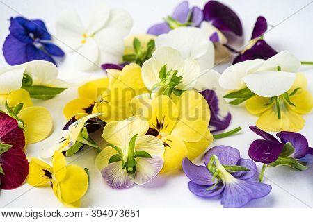 viola flowers on the white background