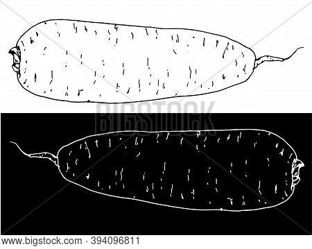 Drawing Of A Root Vegetable With A White Line On A Black Background. Daikon, Japanese Radish Or Carr