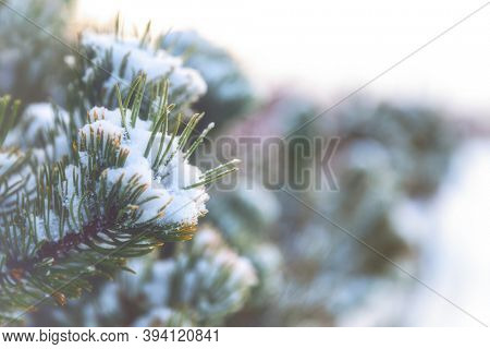 Christmas tree branches covered with snow with space for your text. Retro style matte processing and bokeh background.