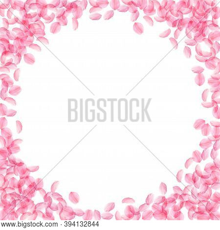 Sakura Petals Falling Down. Romantic Pink Silky Medium Flowers. Thick Flying Cherry Petals. Corner F