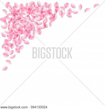 Sakura Petals Falling Down. Romantic Pink Silky Medium Flowers. Thick Flying Cherry Petals. Top Left