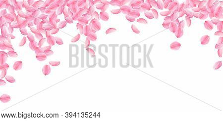Sakura Petals Falling Down. Romantic Pink Bright Big Flowers. Thick Flying Cherry Petals. Wide Falli
