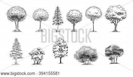 Tree Sketch : Set Of Hand Drawn Architect Trees. Sketch Architectural Illustration Landscape.
