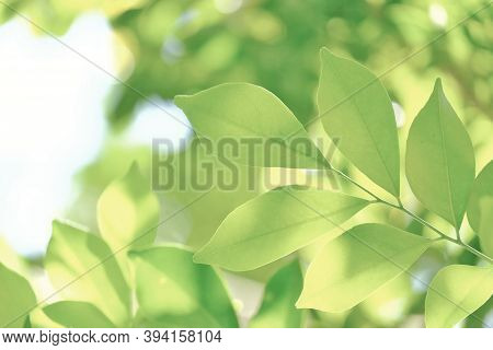 In Selective Focus Tropical Leaves With Soft Light And Green Nature Background