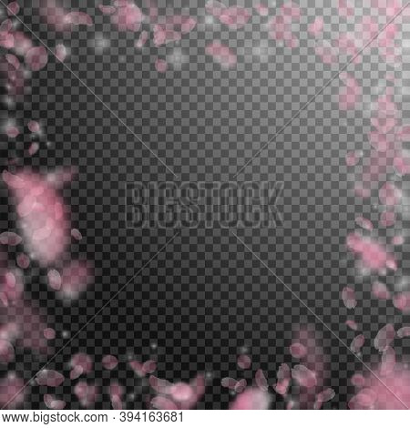 Sakura Petals Falling Down. Romantic Pink Flowers Frame. Flying Petals On Transparent Square Backgro