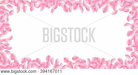 Sakura Petals Falling Down. Romantic Pink Bright Big Flowers. Thick Flying Cherry Petals. Wide Scatt