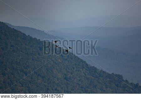 Flock Of Wreathed Hornbill Flying Against Mountain Range In Khao Yai National Park Thailand