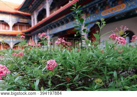 Needle Flower At Chinese Buddhist Temple In Bangkok Names