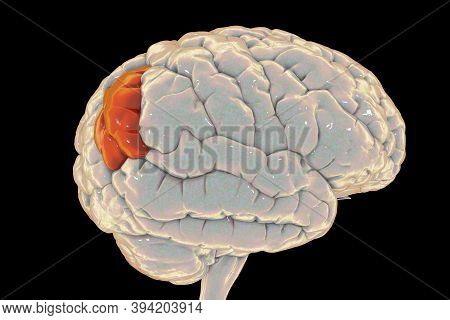Human Brain With Highlighted Angular Gyrus, 3d Illustration. It Is Located In The Parietal Lobe, Is