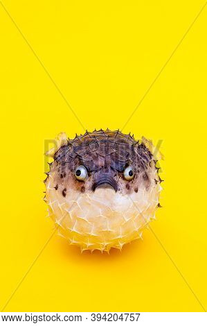 Hedgehog Fish On Vivid Yellow Background. Copy Space. Close-up. Lose Weight For Summer Concept. Take