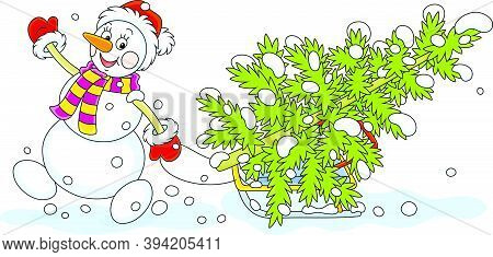 Friendly Smiling Snowman With A Red Hat, A Warm Scarf And Mittens Carrying A Prickly Green Fir On A