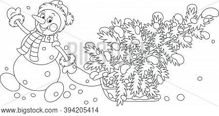 Friendly Smiling Snowman With A Warm Hat, A Scarf And Mittens Carrying A Prickly Fir Tree On A Sledg