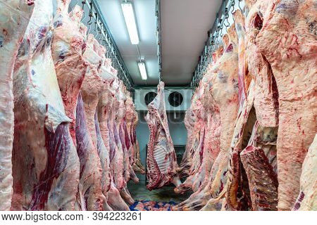 Meat Industry At Slaughterhouse, Meats Hanging In The Cold Store. Cattles Cut And Hanged On Hook In
