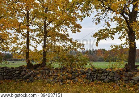 Beautiful Fall Season View With Glowing Trees By An Old Dry Stone Wall