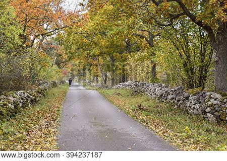 Jogger By A Fall Season Colored Country Road Surrounded By Old Dry Stone Walls