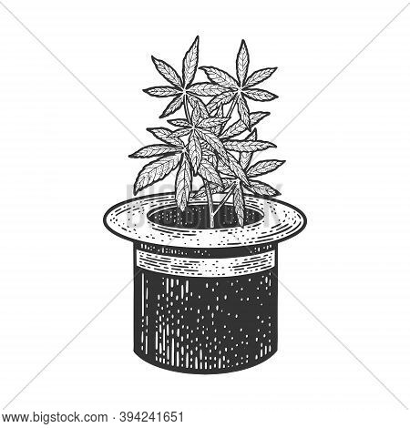 Hemp Cannabis Plant In Top Hat Cylinder Sketch Engraving Vector Illustration. T-shirt Apparel Print