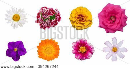 Various Flowers On An Isolated White Background. Chamomile, Carnation, Marigolds, Rose, Petunia, Cal