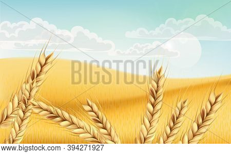 Field Full Of Wheat Grains. Blue Cloudy Sky. Realistic 3d Mockup Product Placement