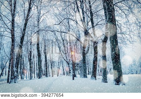 Winter landscape, winter evening park with shining lanterns and snowfall over winter trees. Winter city scene with snowfall, winter park alley, winter landscape