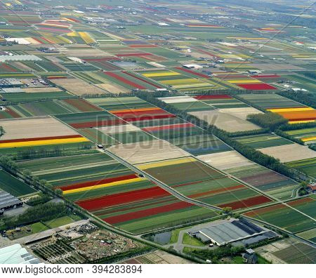 Lisse, Holland, May 12 - 1986: Historical aerial photo of the colorful flower fields near Lisse and Voorhout in the province Zuid Holland