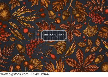 Design On Dark Background With Fern, Dog Rose, Rowan, Ginkgo, Maple, Oak, Horse Chestnut, Chestnut H
