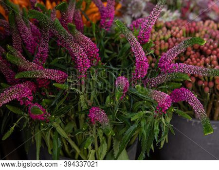 Fresh Cut Pink Flowers Of Veronica Plant Or Spiked Speedwell At The Greek Flower Shop In Autumn.