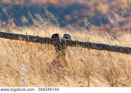 Country Basic Handmade Rural Wooden Fence In Tall Golden Autumn Grass On Vivid Mountain Forest Backd