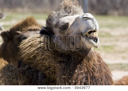 Camel_Mg_0068