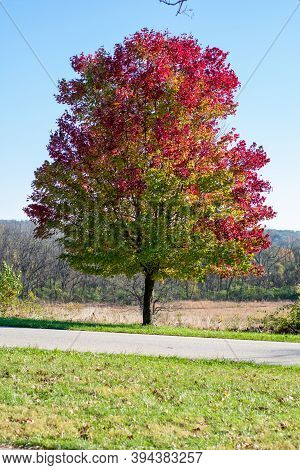 A Tree With Red And Green Leaves Next To A Small Blacktop Road In A Field During Autumn