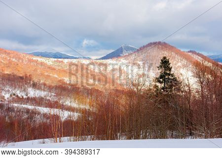 Uzhanian Natural Park In Snow Covered Mountains. Beautiful Nature Scenery On A Sunny Day. Mixed Fore