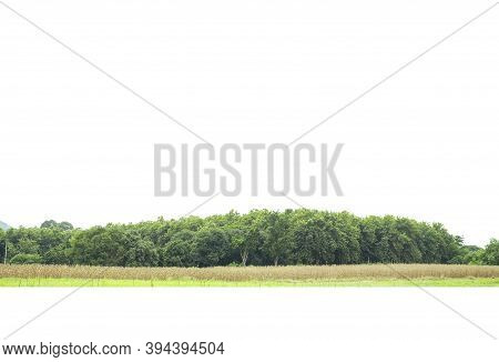 View Of A High Definition Treeline Isolated On A White Background.