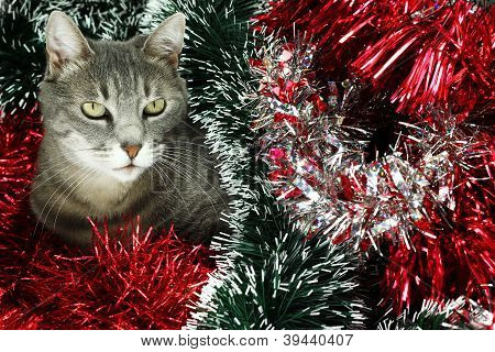 Kitty covoered by various Christmas decorations . poster