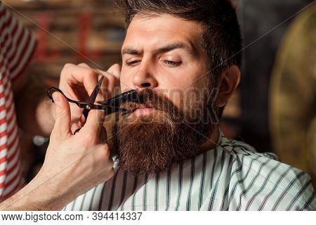 Barber Shearing Beard To Man In Barbershop, Close Up. Vintage Barbershop, Shaving. Beard Styling And