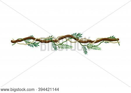 Liana With Long Stem And Stiff Branch As Woody Vine Vector Illustration