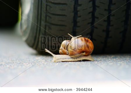 garden snails racing on road dangerous. action animal poster