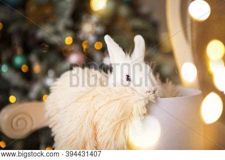 A White Rabbit Sits Inside A White Round Box. Christmas Decor, Christmas Tree With Lights Garlands.
