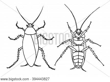 Set Of Cockroaches Pest, Contour Vector Illustration Of A Cockroach, Top View And Bottom View.