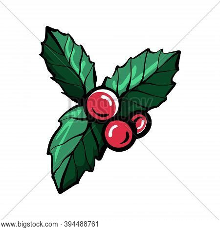 Holly Branch Hand-drawn Linear Vector Illustration. Christmas Holly Berries,
