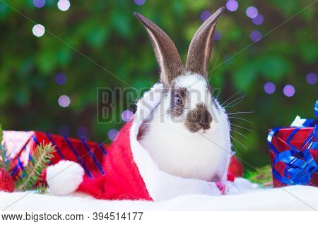 Holiday Card With Pet. Little Cute Baby Rabbit Sitting In Gift Box On New Year Background. Festive B